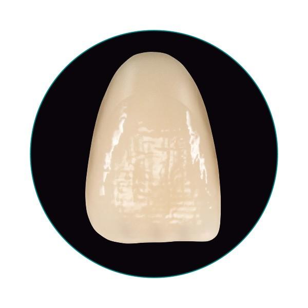 La dent VITA VIONIC VIGO en vue frontale