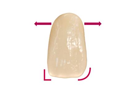 Naturidentisch ausgestaltete Zahnflächen VITAPAN PLUS